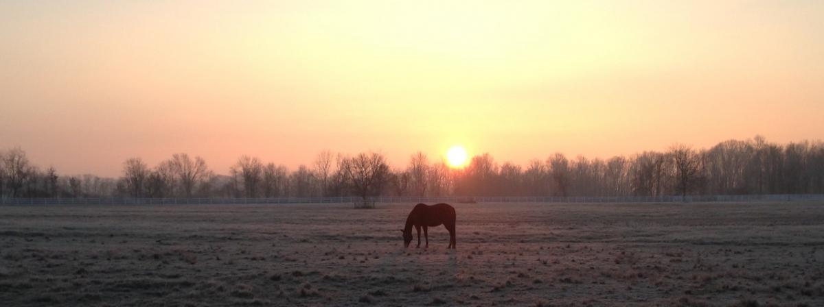 A horse on the farmland