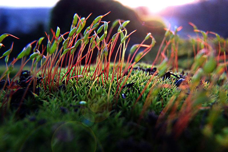 Macro photograph of moss