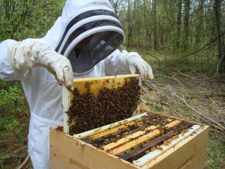 Take an introduction to beekeeping class in Defiance, Ohio.