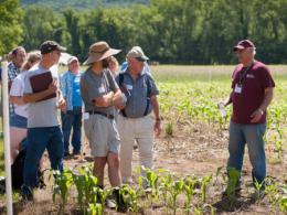 People observing a corn field