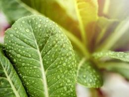 Ohio State's 2019 Greenhouse Management Workshop will focus on the root zone of plants. It's set for Jan. 17-18 in Wooster. (Photo: Getty Images.)