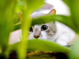 An EPN Breakfast Series presentation on cats is Nov 7.