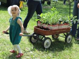 Little girl in a white hat pulling a wagon with plants at Chadwick Arboretum Plant Sale