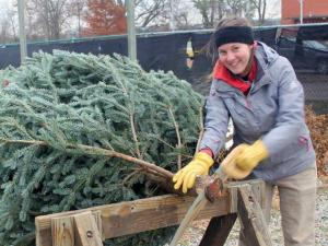 Student working the Forestry Forum's Christmas Tree Sale