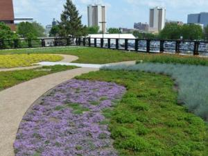 Howlett Green Roof in Full Bloom