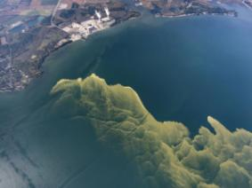 Aerial view of a harmful algal bloom in Lake Erie in 2017.