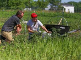 Students continue work at the OSU Student Farm located at Waterman