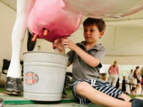 Boy milking a cow model