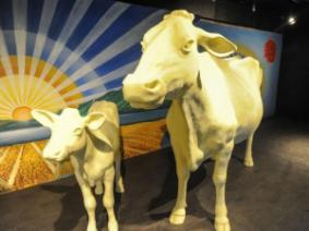 Butter cows at the Ohio State Fair